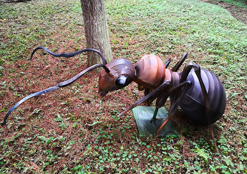 蚂蚁betway官网,昆虫betway官网,